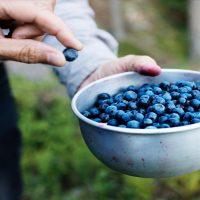Organic-Blueberries-Ganico-02